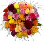 Buy a bunch of mixed colour roses for that special occasion - Click to enlarge