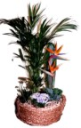 Send a variety of healthy flowering and other pot plants in a suitable container - Click to enlarge